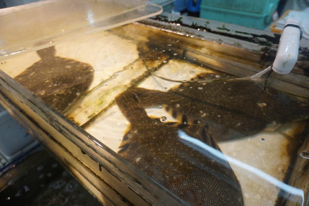 そして、出会ったのがこちら。北海道が誇る幻の高級魚「タンタカ」です!